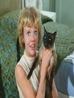 Dorothy Provine with Cat