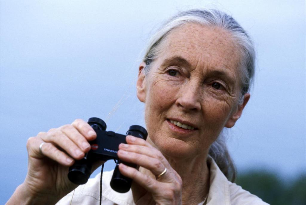 Jane Goodall Latest Wallpaper