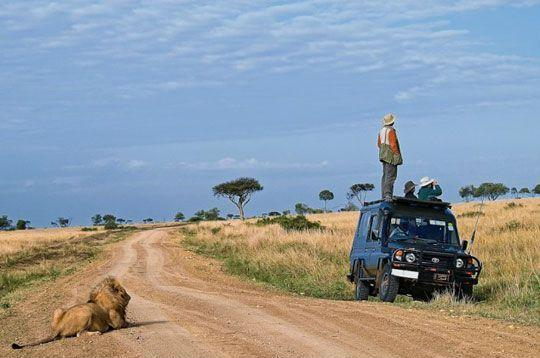 On a safari, looking for lions…