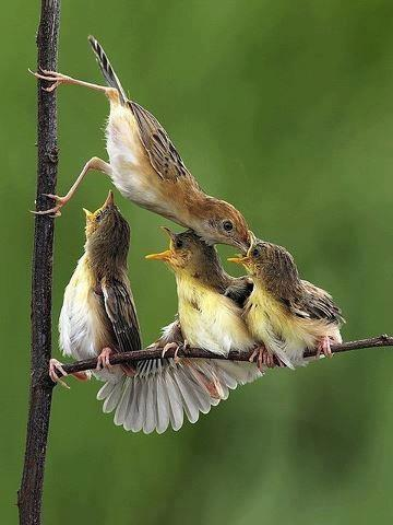 Feeding the Brood