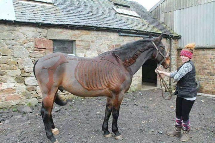 Totally Unique Looks Like Skeleton of Horse