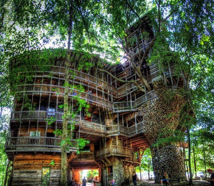 World's largest tree house