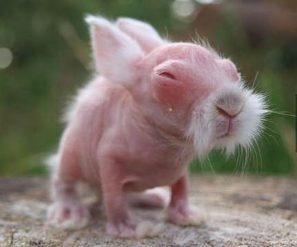 If Mr. Miyagi was a rabbit