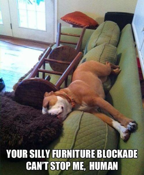 Pictures of the week, 70 pics. Your Silly Furniture Blockade Can't St
