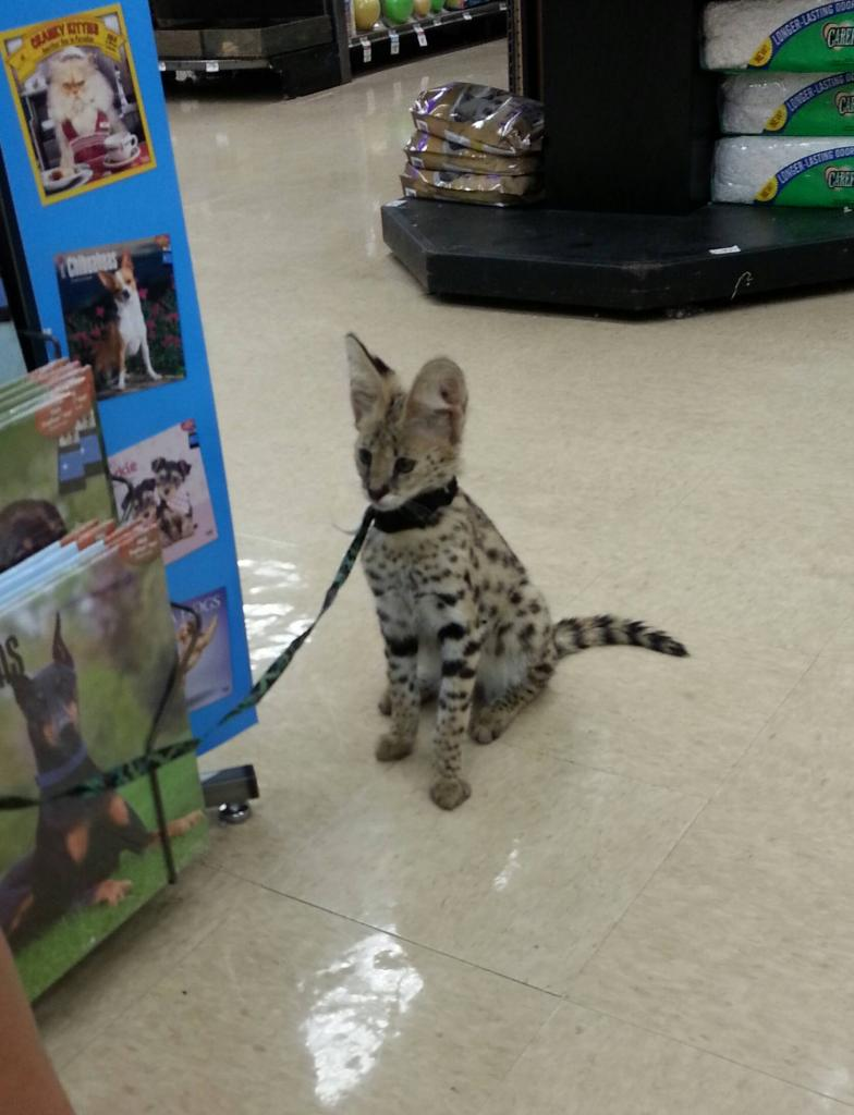 Saw this guy at my local pet store today.