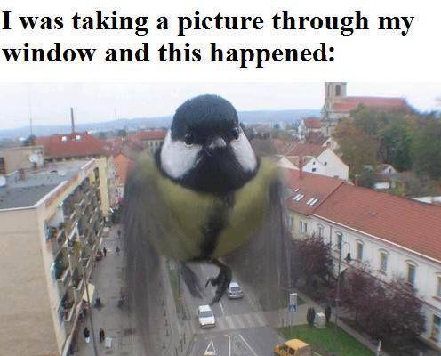 Hahahaahahahaha
