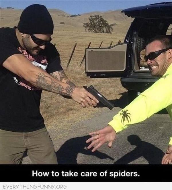 Spider problem