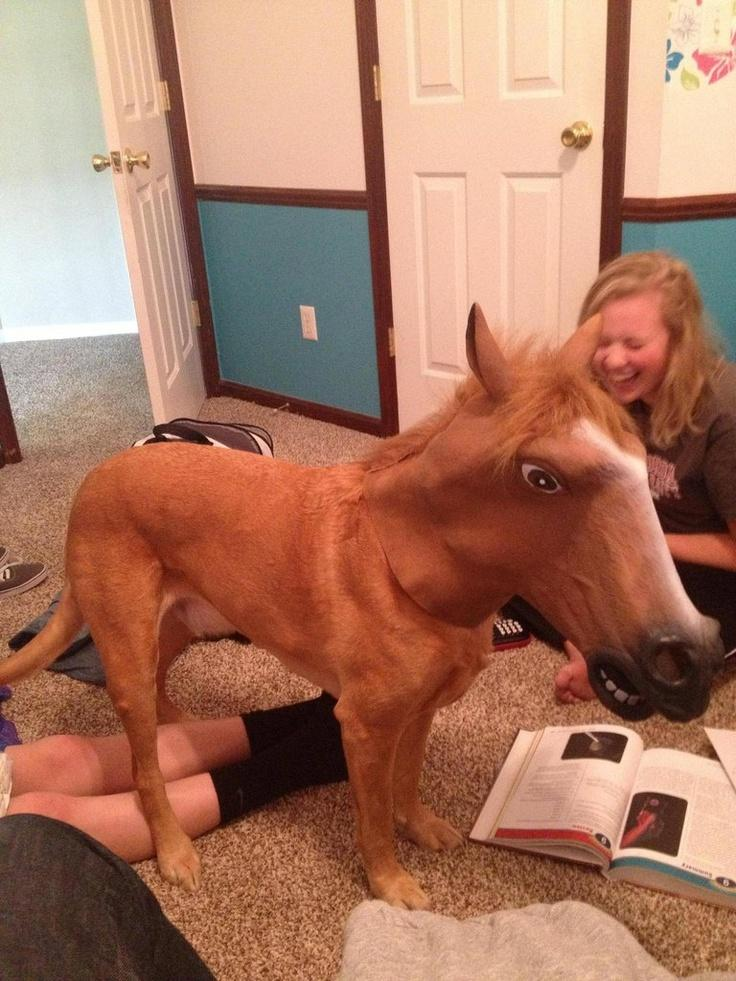 So I put my horse mask on my dog… I cannot stop laughing
