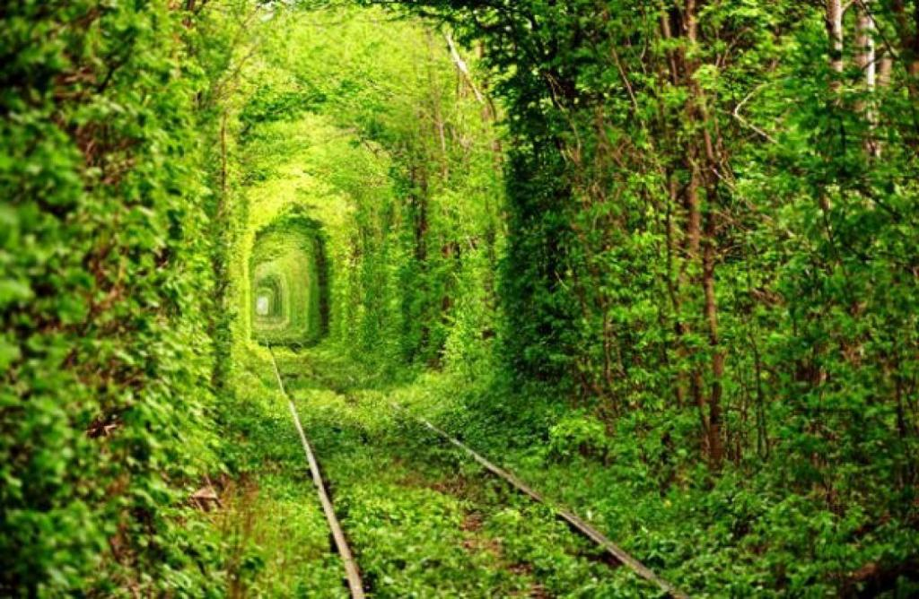 Train Track is Covered By Green Forest