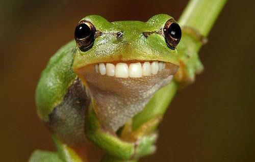 Funny Picture of Frog