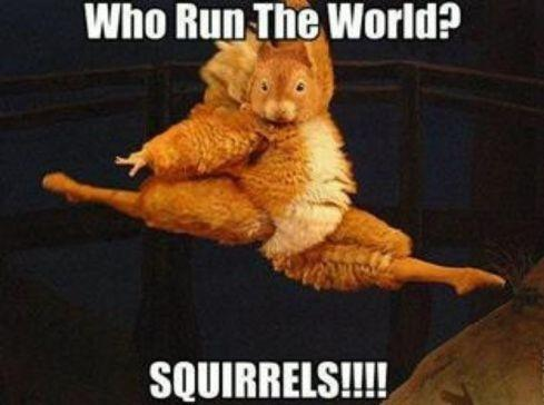 If Beyonce were a squirrel she would be this squirrel