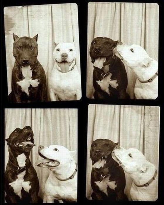 I always wondered what two pitbulls would do in a photo booth. Now I k