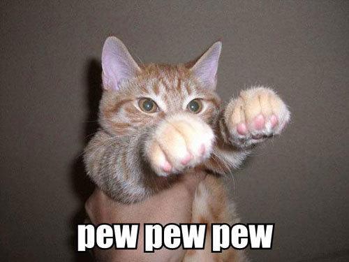 pew pew... Funny Cat Photos