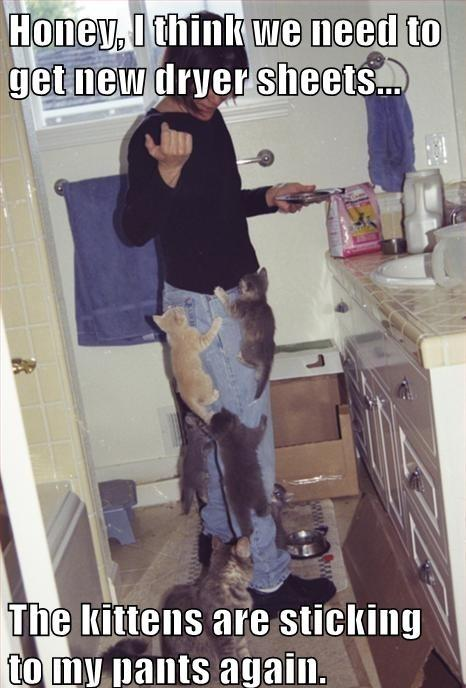 This was me last week. I had all the kitten climbing me when I brought