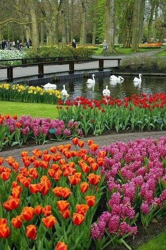 Flower Garden Amazing Photo