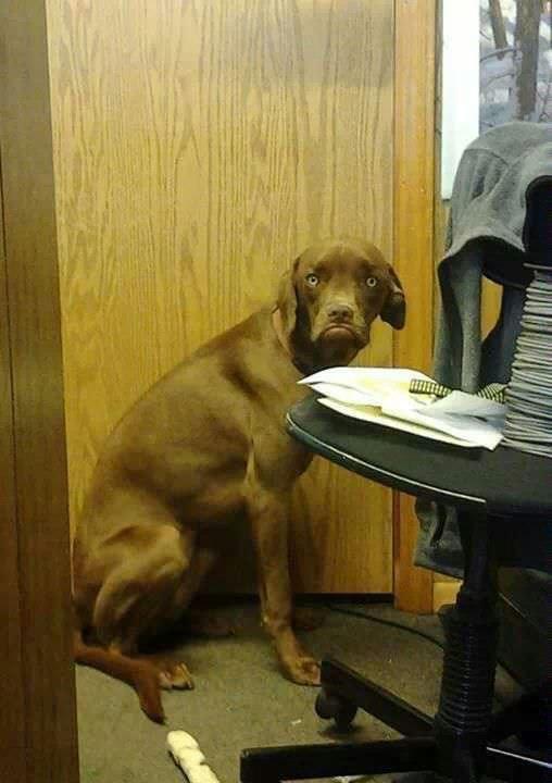 Grumpy dog...