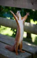 I swear the nut was thiiiiiiiiis big!