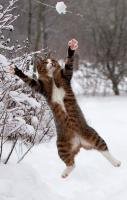 I got it!… I got it!…