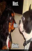 funny dog picture staring contest