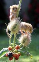 Cute mice...