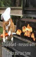Cat cooks bird on bbq funny pictures