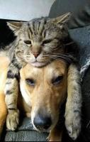 Lovely Friendship between Dogs and Cats