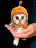 look like an owl to me... funny but cute