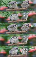 Owls Humour.. LOL