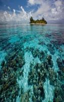Coral Reefs of South Water Caye, Belize... amazing!