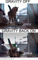 Gravity and the Animals... LOL