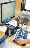 tiny antelope on a keyboard and more amazing animal pics