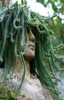 Medusa Head Planter