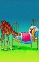 How a giraffe sleep!