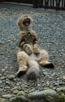 cat lol