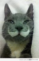 Majestic Mustache Cat