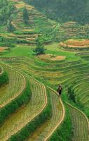 Longshen Rice Terraces in Guilin, China