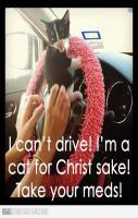 I cant drive Im a cat