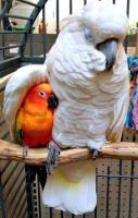 Parrots Showing Love... Cute