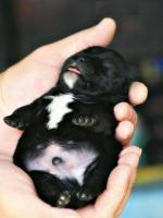 cute small dog in hand photo