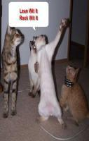 Naughty Funny Cats Pictures