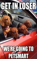 Mean Girls as Doxies... would that be called Mean Bitches then