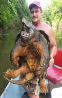 A snapping turtle caught in Oklahoma this week