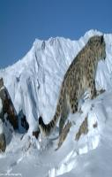 Indian View of Snow Leopard