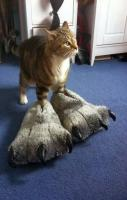 rawr - kitty slippers