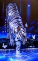 Wildcats Tiger