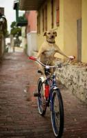 Dog riding a cycle