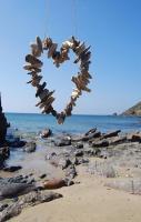 Shell heart ...