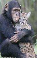So cute! Weirdest animal couple ever! Who ever said you needed to have