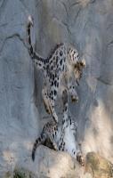Life of SnowLeopard