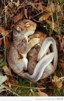 Spooning. Adorable animal style